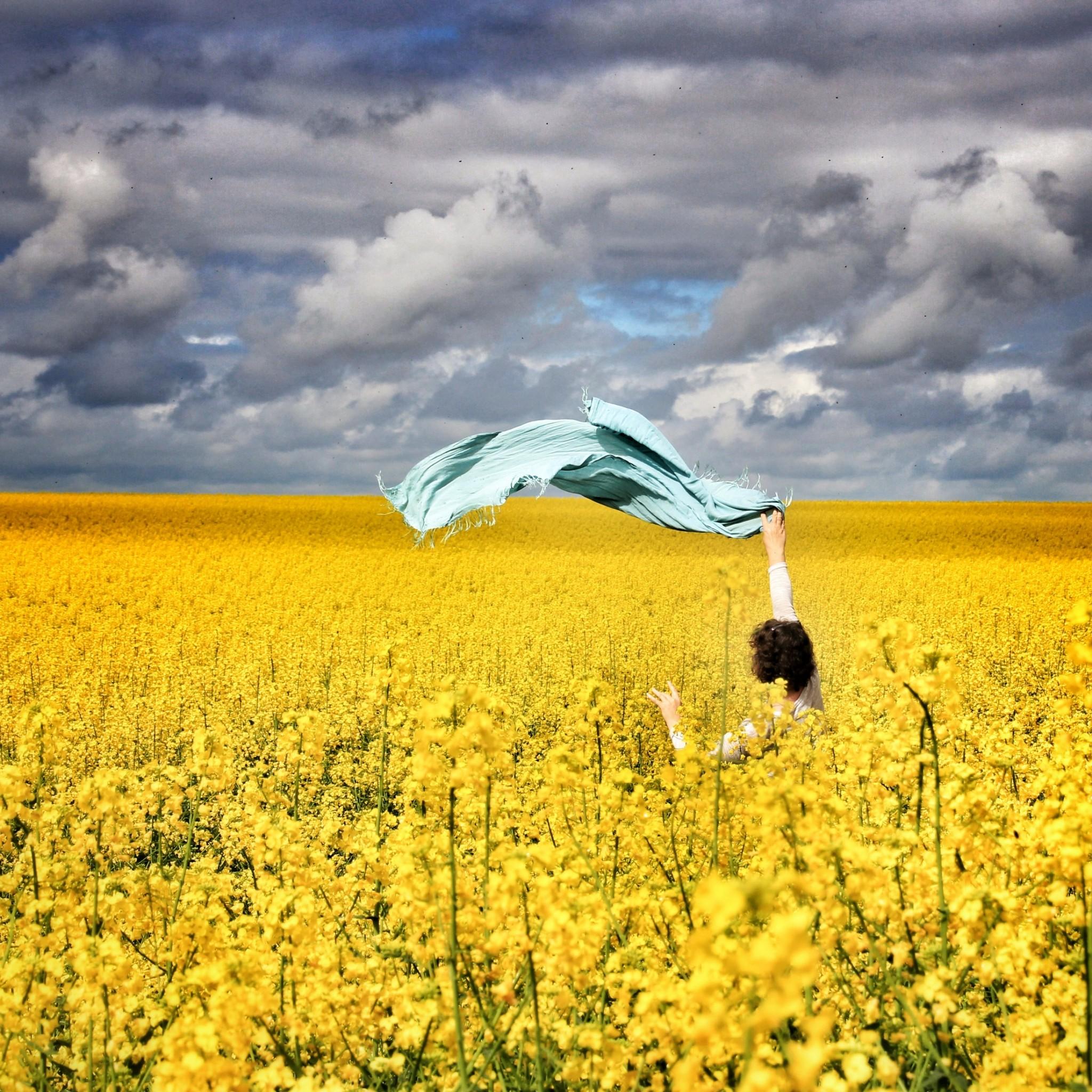 Timbrado et la nature, le champ de colza