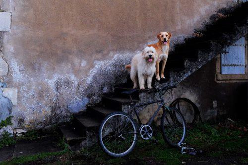 les chiens du château me regardent repartir sagement.