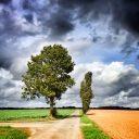 Duo d'arbres Saint Maixent